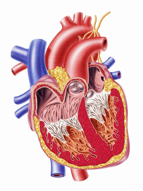 Would blockage in arteries of the heart cause an irregular heart beat?