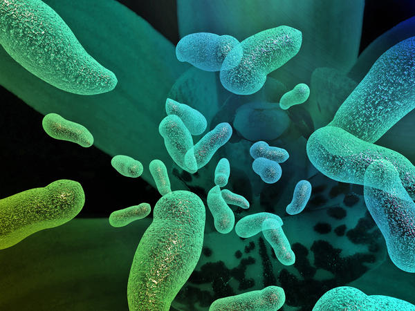 What are the symptoms of Bacterial infections?