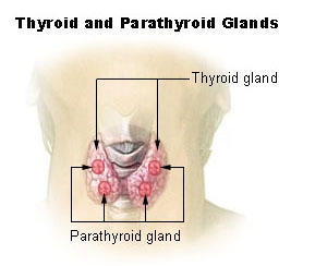 What are some of the symptoms of an enlarged thyroid?