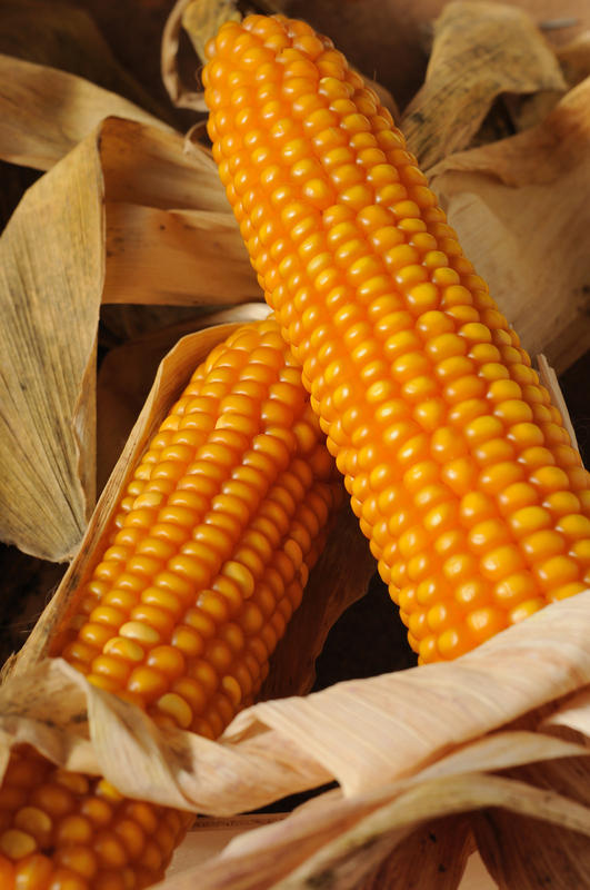 What does having corns mean?