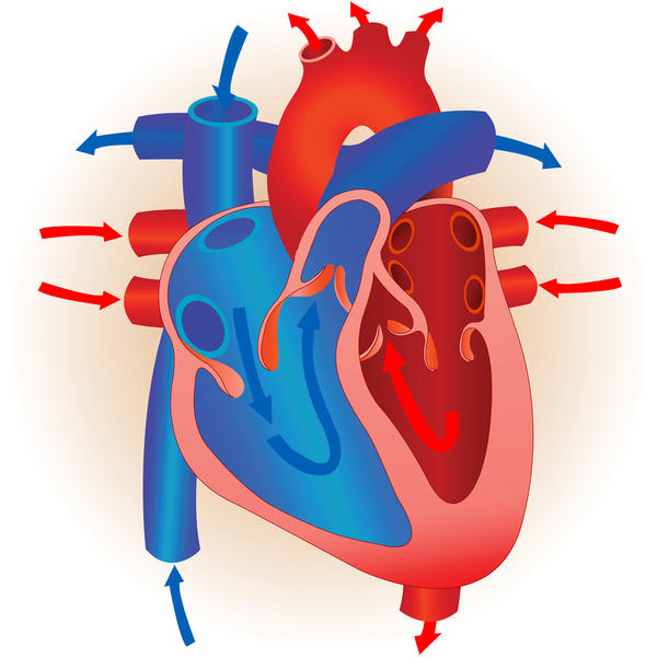 What is meant by pulmonary heart disease?
