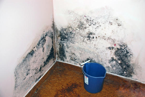 How should we contain black mold that is growing in our house?
