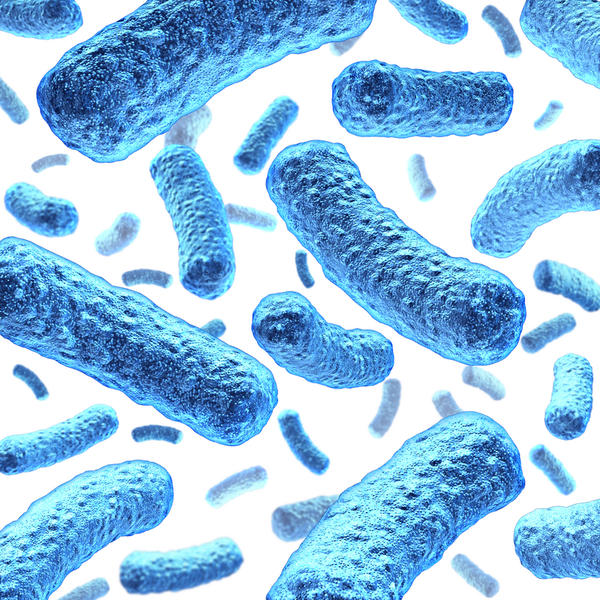 What is escherichia coli?