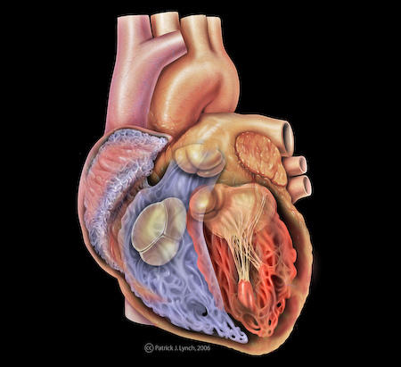 Where can I get the most accurate visual look at the aorta and how it also ascend into the carotid arteries?