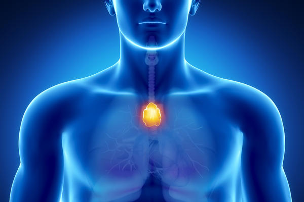 Where does thyroid gland locate at in our body?