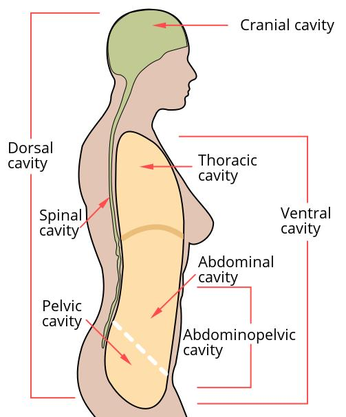 What would cause lower of abdominal pain in the left lower section of the abdominal cavity?