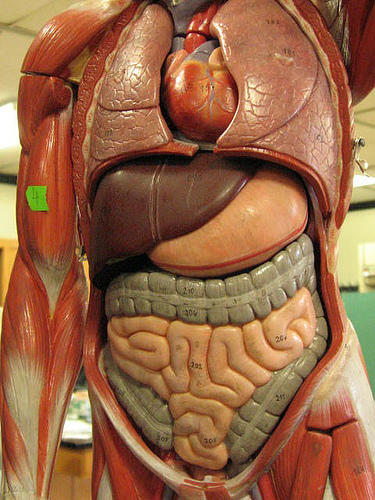Ulcerated and vascular-patterm-decreased mucosa in the.Sigmoid colon?