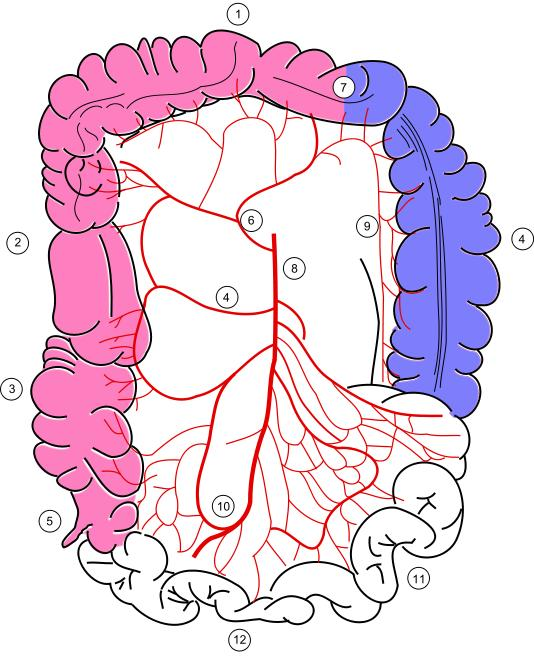 What is the difference between a colon polyp and a colon lesion?