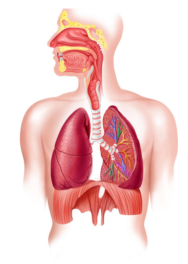 What are the organs in the respiratory system and if they malfunction, is it deadly?