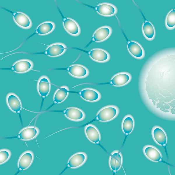 Is there a difference in appearance between fertile and sterile sperm?