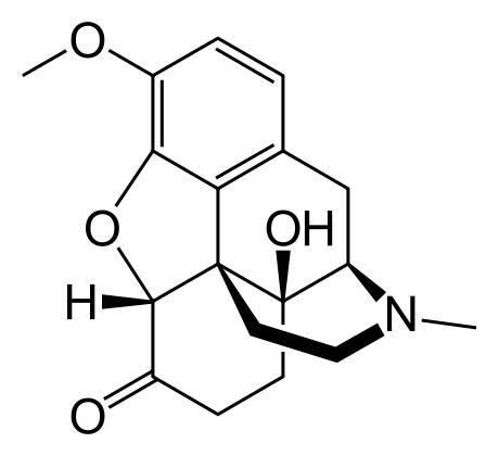 I am on Dilaudid rx for my pain. I took Oxycodone for about 2 days. Will the oxycodone show up on a urine drug screen given by my pain clinic a month after consumption?
