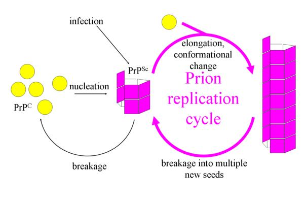 What conditions are caused by a prion?
