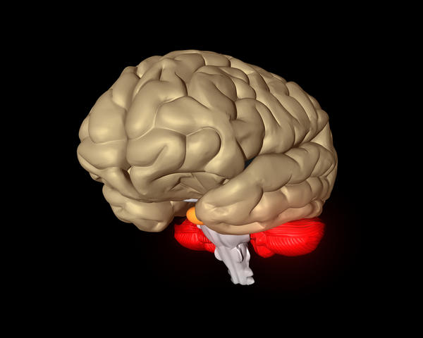 Could temporal lobe epilepsy cause bad behavior?