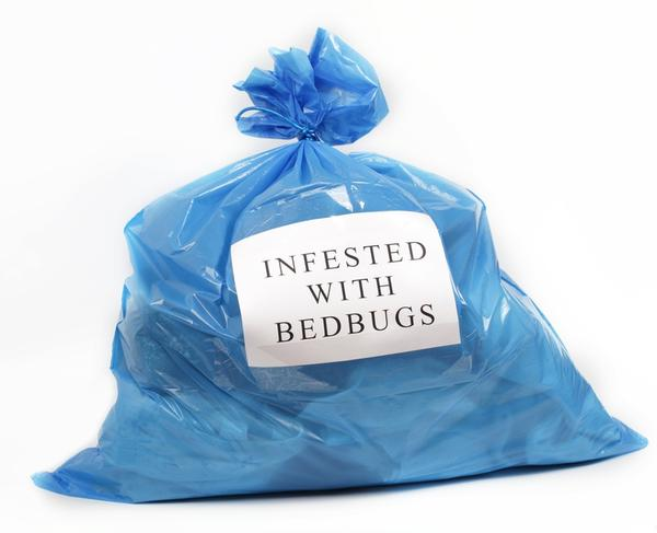 Could bed bugs spread through clothes or car seats?