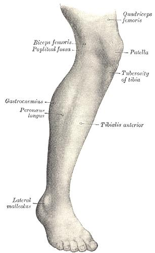 Please explain what are some symptoms of a strained calf muscle?