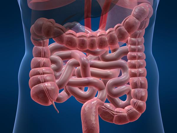 What is produced by the glands lining the walls of the intestine?