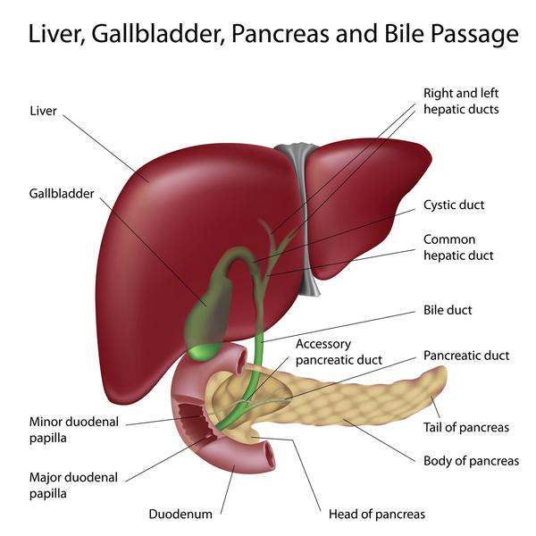 Does a HIDA scan study the liver and the gallbladder, or just gallbladder and bile ducts?