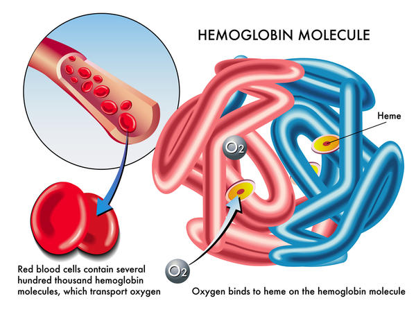 Would human blood remain the color red if all of the red blood cells were removed?