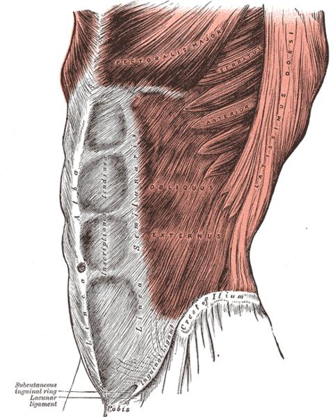 What causes stiffness and tightness in the entire upper abdomen into the ribs?