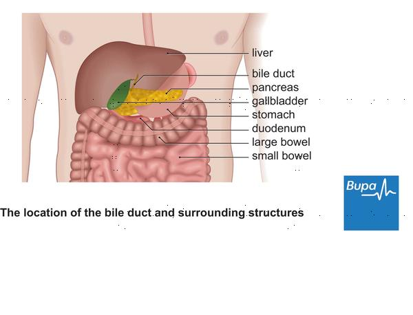 Where is the gallbladder located on the female body?