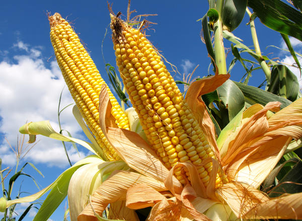What are some good home remedies for corns on your feet?