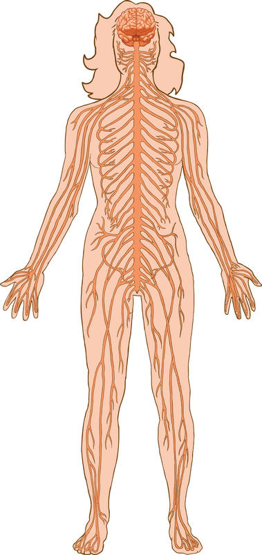 What are some diseases associated with the autonomic nervous system?