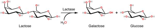 Can i take lactase enzymes with prosac?