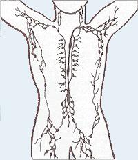 Do I have Lymph Nodes, in my waist/groin area? It feels like I do. There is little knots that feel just like Lymph Nodes. And these ones feel swollen.