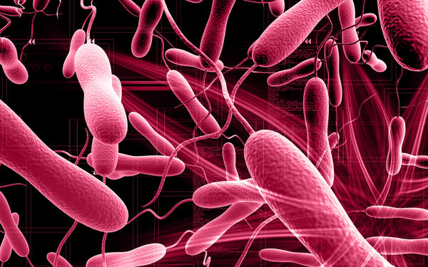 Is cholera like typhoid?