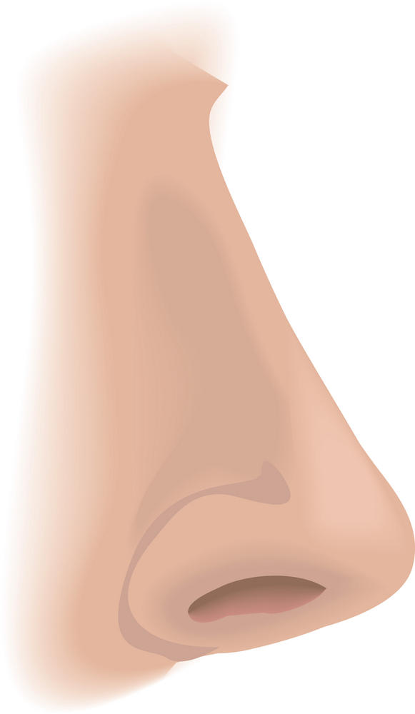 Would an inverted papilloma in the nostril be easily distinguished from cartilage that may protrude?Dr. Thinks tiny thing on inner wall is cartilage.