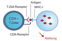 Whats the difference between cd3 and CD4 cells?