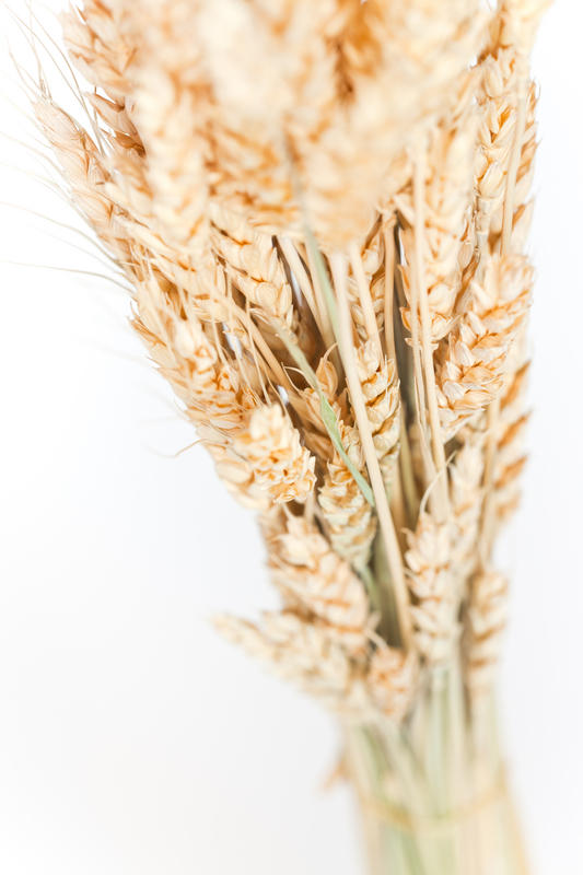 What amount wheat germ am I allowed to eat per day?