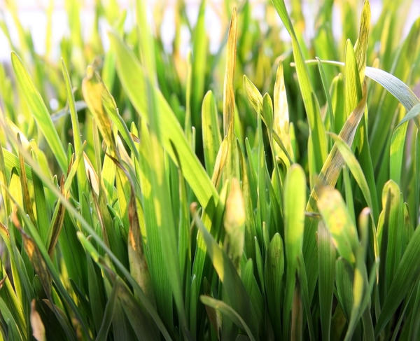 Is there any way around a grass allergy?