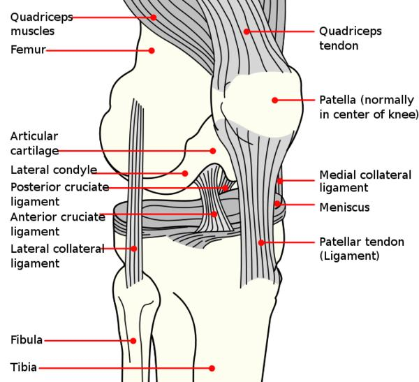 What are the symptoms for a torn patella tendon?