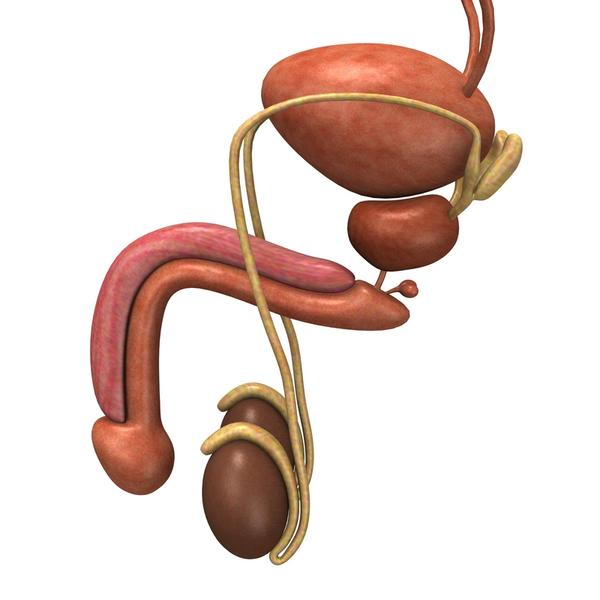 Does a pinched pelvic nerve cause swollen testicles?