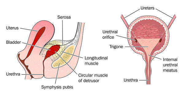 What are symptoms of chronic urinary retention?