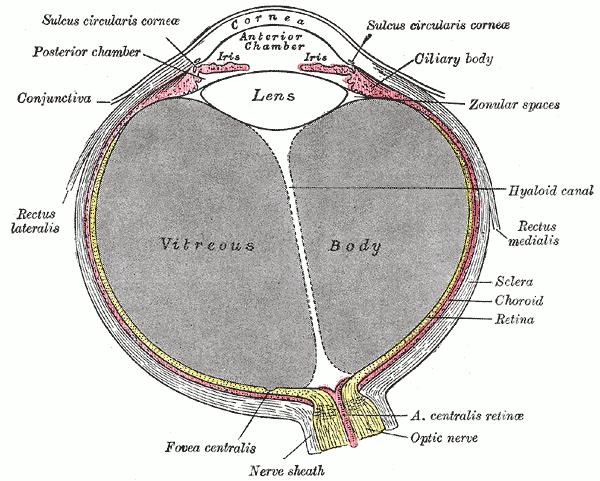 What is the treatment for infection of the back of the eye?