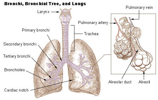 What is a lung scar?