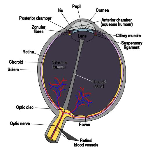 What are symptoms of cataracts of the eye?